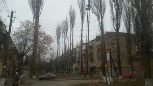 Небезпечні дерева нарешті зрізали